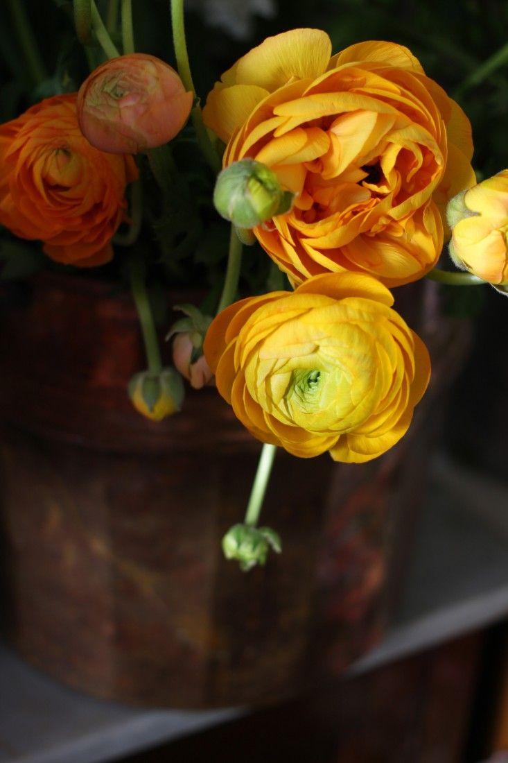 Miss Pickerin's flowers, Stamford, England. Gardenista