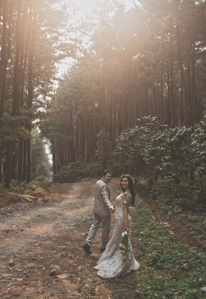 Prewedding pine Forest #concept #photography #wedding #vintage #classic #modern