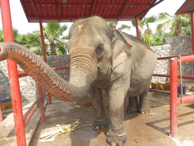Hutsadin Elephant Sanctuary in Hua Hin, Thailand
