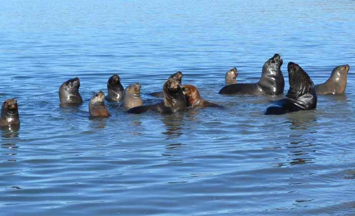 """""""La Caleta"""": Reserva Natural de lobos marinos en Patagonia"""