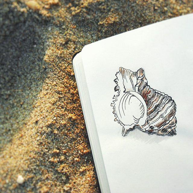 """Bazen Özlem bana deniz kabukları yollar ben de onları tek tek araştırır isimleri ve resimleri ile defterime not ederim. Mesela bu arkadaş bir """"apple murex"""" (umuyorum). İnsanın en sevdiği kilometrelerce uzakta olunca ondan gelen her şey ayrı kıymetli oluyor. Neyse. Deniz kabuklarını sevin"""