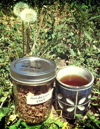Dandelion Coffee 101 – HOMEGROWN