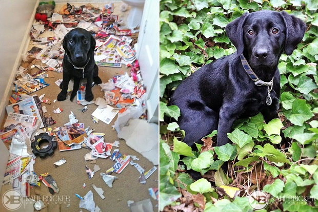 Labrador Rescue Photo Shoot | Its a Lab Thing