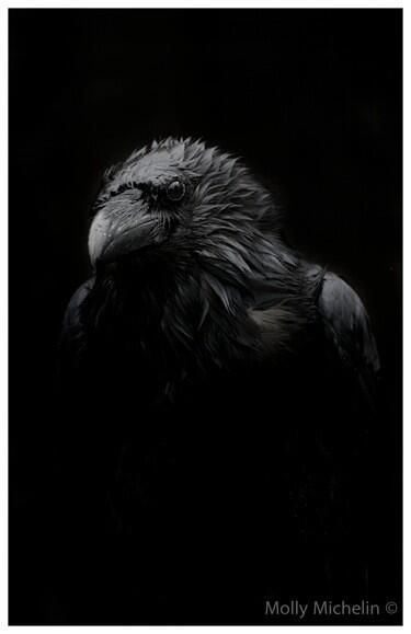 One of my favourite ever Raven images