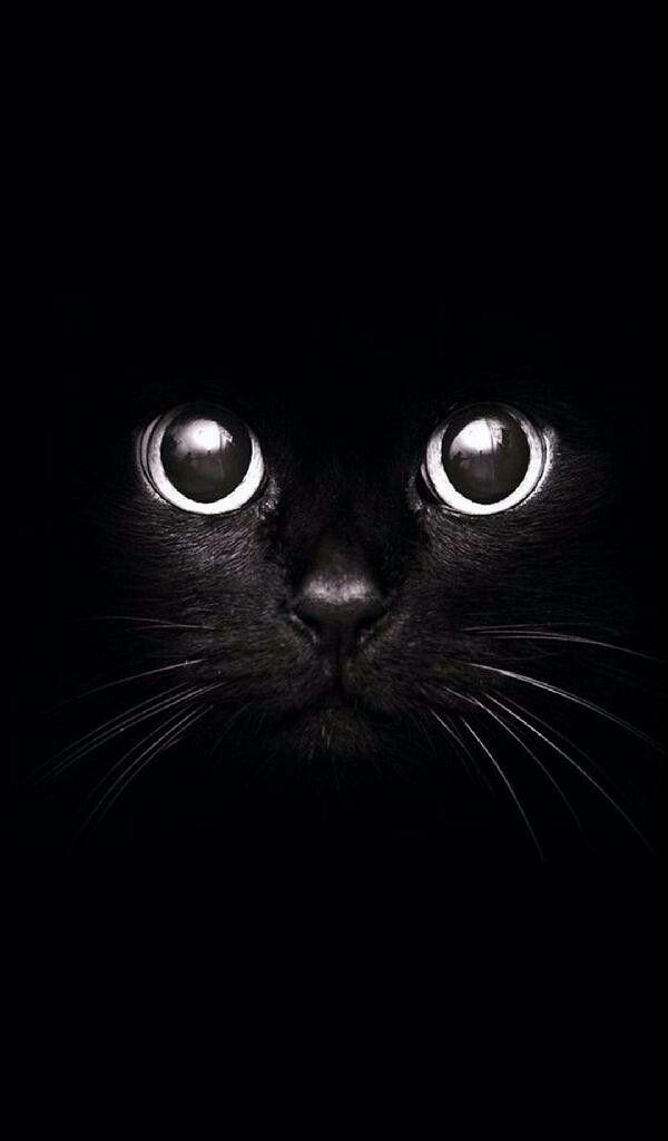 Te Estoy Observando Animal Wallpaper Cat Art Cat Wallpaper Black cat wallpaper full hd