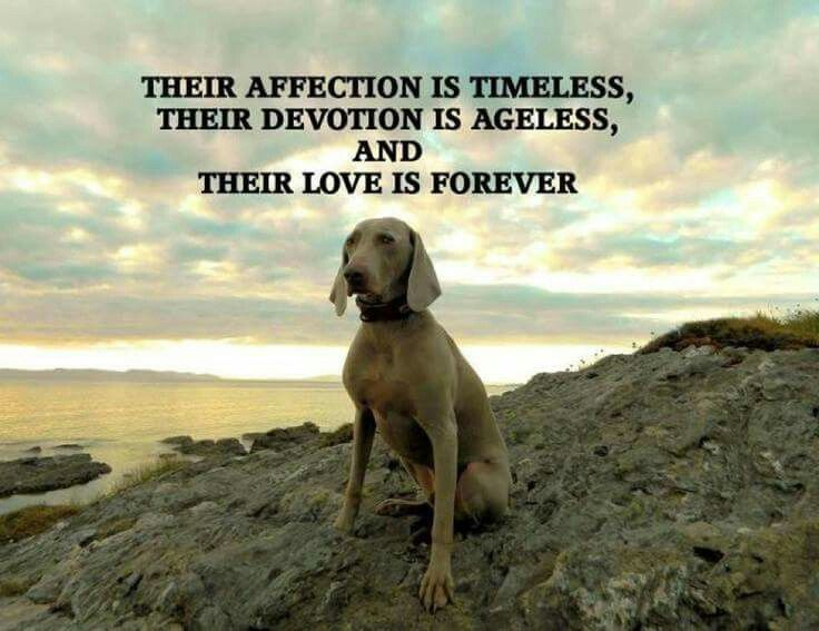 Image result for love of dog is timeless, ageless, unconditional