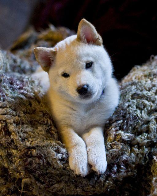 Cutie Pup by SurlyCook, via Flickr