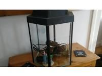 New & used aquariums for sale in Herefordshire - Gumtree