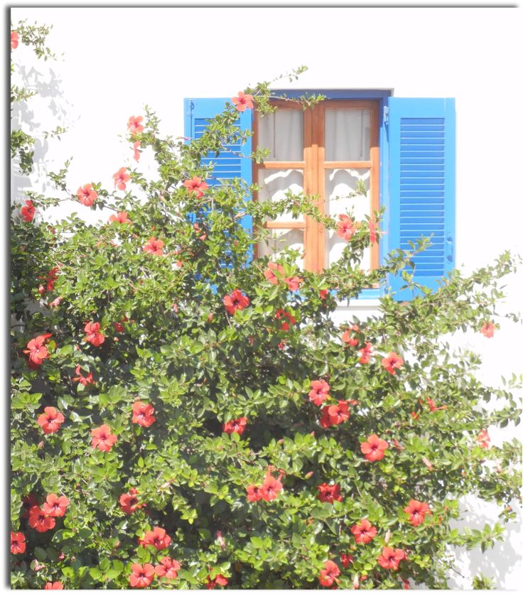Archontiko Mary #paros #summer #flowers #greece #vacation #room
