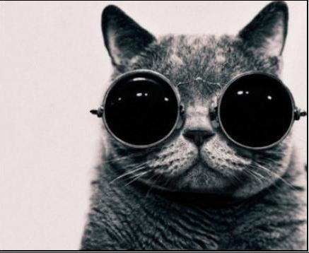 Me parecio ver un lindo gatito!