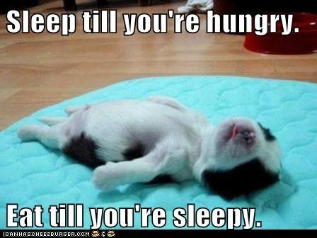 funny dog pictures - I Has A Hotdog: Puppy Life PhilosophyHappy Friday, Dogs, Tiny Animal, Little Puppies, Funny Friday, Baby Animal, Naps Time, Funny Puppies, Sleep Puppies