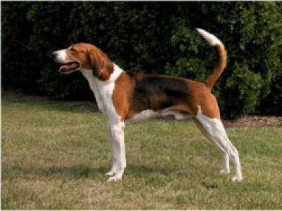 Quelles races de chiens supportent bien la chaleur? - lebonchien.fr