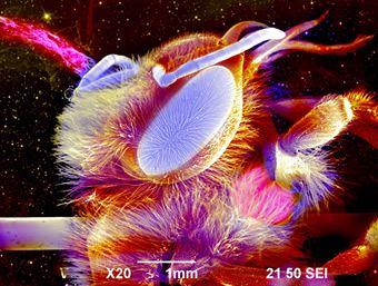 Image result for fotografía microscópica