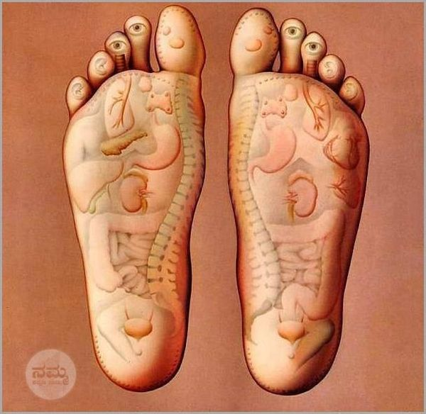 Acupressure Works! The Organs of your body have their sensory touches at the bottom of your foot, if you massage these points you will find relief from aches and pains as you can see the heart is on the left foot.  Typically they are shown as points and arrows to show which organ it connects to. It is indeed correct since the nerves connected to these organs terminate here. Every time you walk BAREFOOT you are pressing these pressure points and thus keeping these organs activated at all…