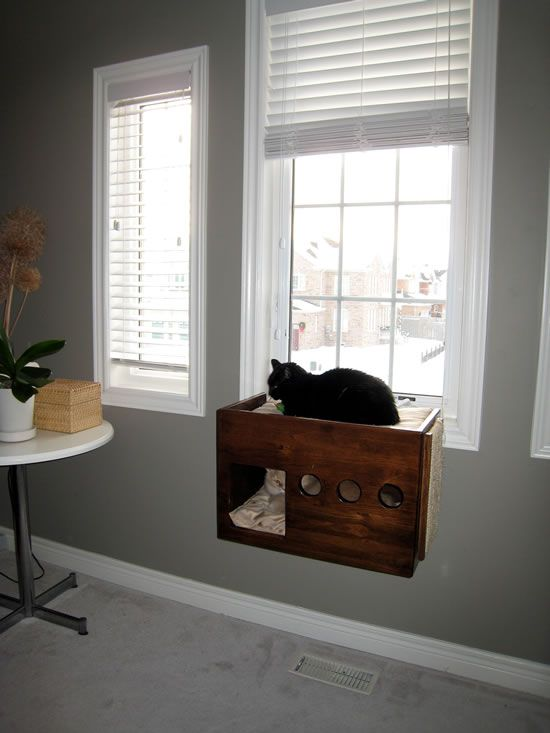 Love This Cat Window Perch For Two Cats