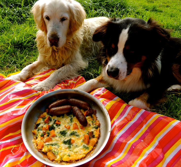 Picnic time @Barkday Paw-ty!