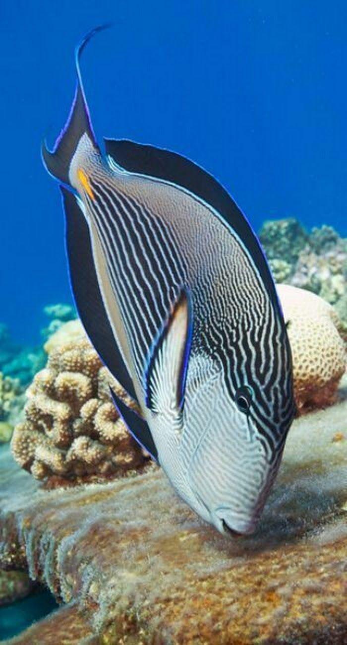 1758 best sealife images on pinterest aquarium blue and death