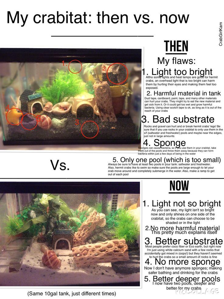 how to build a hermit crab habitat