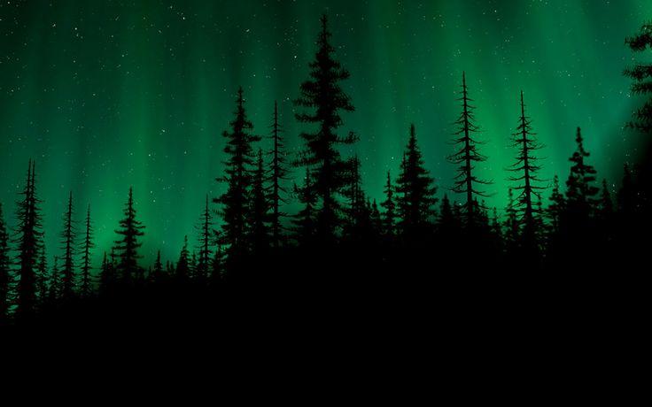 dark green forest - Google Search