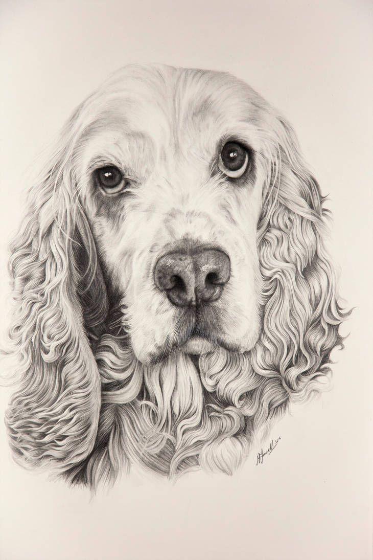 Sabria English Cocker Spaniel By Grimleyfiendish Dieren Tekenen Hond Tekeningen Honden Portretten