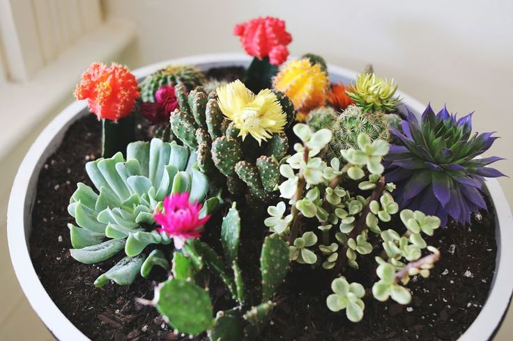 Vintage planter cacti garden | a beautiful mess