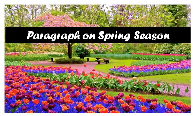 There are four main seasons in India spring, summer, winter and autumn, But I love spring season the most. There are many reasons behind it. Today in this article I am sharing a short paragraph on the spring season.   #paragraph on seasons #the season i like most #what is spring season