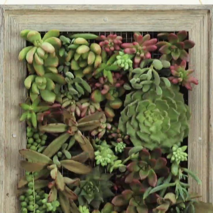 Turn plants into art with this diy vertical garden more for Indoor succulent wall