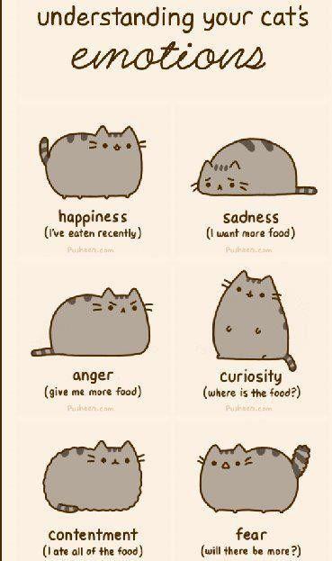 So true around here!: Laughing, Cat Emotional, Food, Funny, Fat Cat, Humor, Pusheen, Smile, Animal