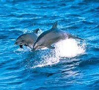 Jervis Bay, Australia: Whales, Dolphins and Fabulous Sailing and Diving