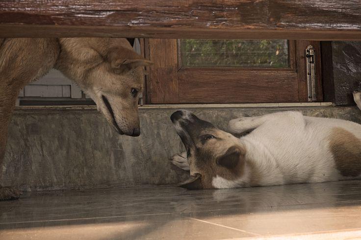 Dogs of Thailand, free hi-res photo to download on #unsplash unsplash.com/laura_lee | Photo blog Poème Photographique, Laura Lee Moreau