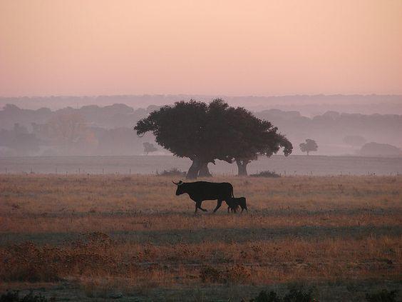 #lluvias #temporal #neblina #incendios #mañana #campo #hacienda #vacas #terneros #campoargentino #cattle #cows #calves #fog #morning #countryside #countryfield #naturalhazards #firesinargentina #LaPampa