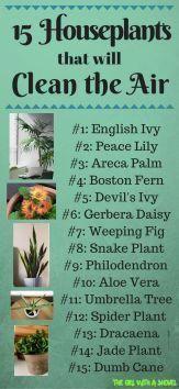 Haus #Pflanzen #Leicht # #Hauspflanzen