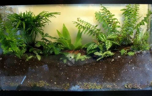 One of the better explanations for creating a bigger terrarium plus has a list of suggested plants to use.
