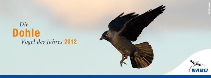 Facebook-Profilbild für die Dohle den NABU Vogel des Jahres 2012