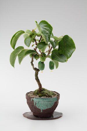 【ミニ盆栽】かわいらしい!実もの盆栽の世界 - NAVER まとめ