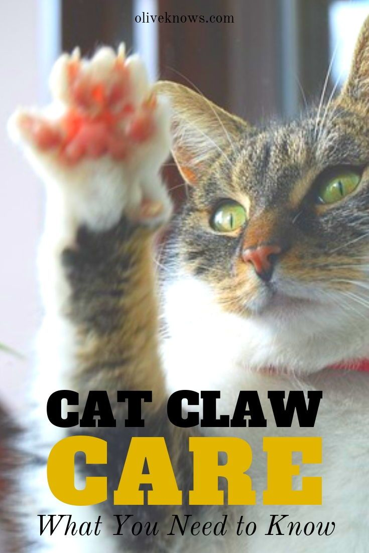 Cat Claw Care What You Need To Know Oliveknows Cats Cat Safety Cat Claws