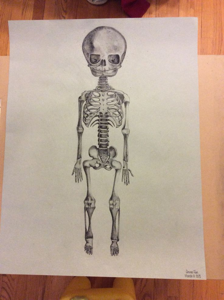 Skeleton of Infant by Cloquet - using charcoal, coloured pencil and fine tip Sharpie By: Anna Fan