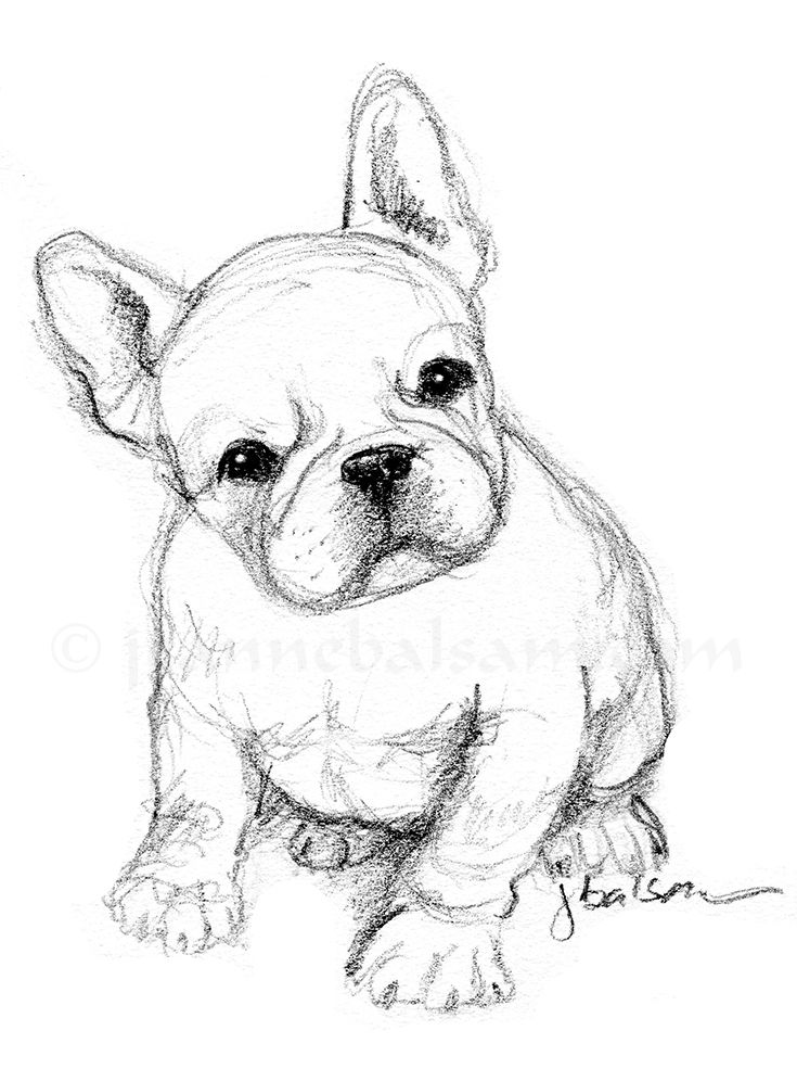 Just a quick sketch of a French Bulldog puppy on a Sunday afternoon - simple, in 2B pencil.