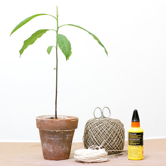 DIY Plant Pots of Twine by Jo handmade design
