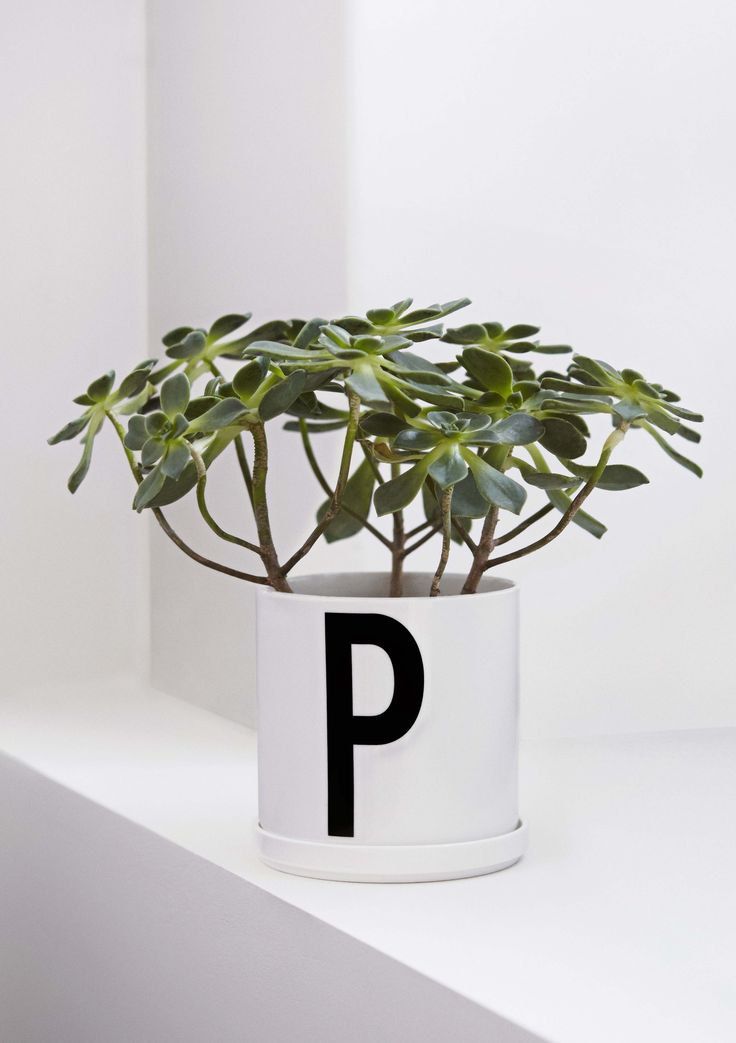 Decorate with plants indoor. For example in our porcelain plant pot - P for Plants!