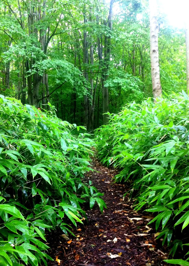 Bamboo woodland in Thor Nitzelius Park Alnarp Sweden. #gardensofscandinavia #gardensofsweden