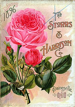 source: http://www.sil.si.edu/digitalcollections/SeedNurseryCatalogs/CF/TL_SeedsSelectImages_2.cfm?StartRecord=16=Roses