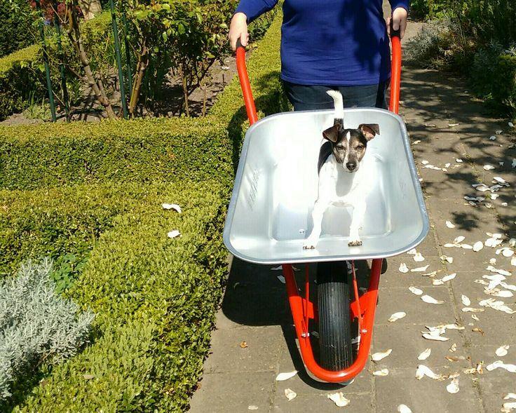 De nieuwe kruiwagen voor de tuin, is ingewijd door Russel.