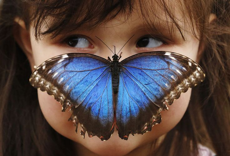 Stella Ferruzola, 3, poses with a Blue Morpho butterfly on her nose at the Sensational Butterflies Exhibition at the Natural History Museum in London, on March 25, 2013. (Credit: Luke MacGregor/Reuters)