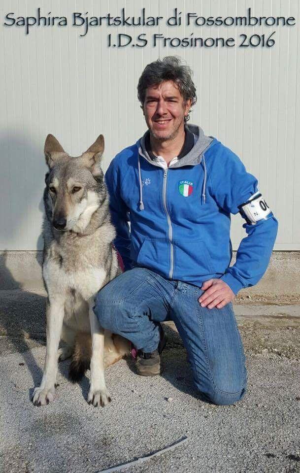 Saphira Bjartskular di Fossombrone 1º Ecc. B.O.S. alla Expo' Internazionale Canina di Frosinone 2016.  #Saarlooswolfdog