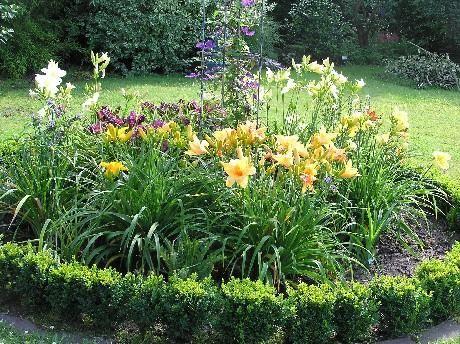 ber ideen zu taglilien auf pinterest taglilie garten lilien und immergr n. Black Bedroom Furniture Sets. Home Design Ideas