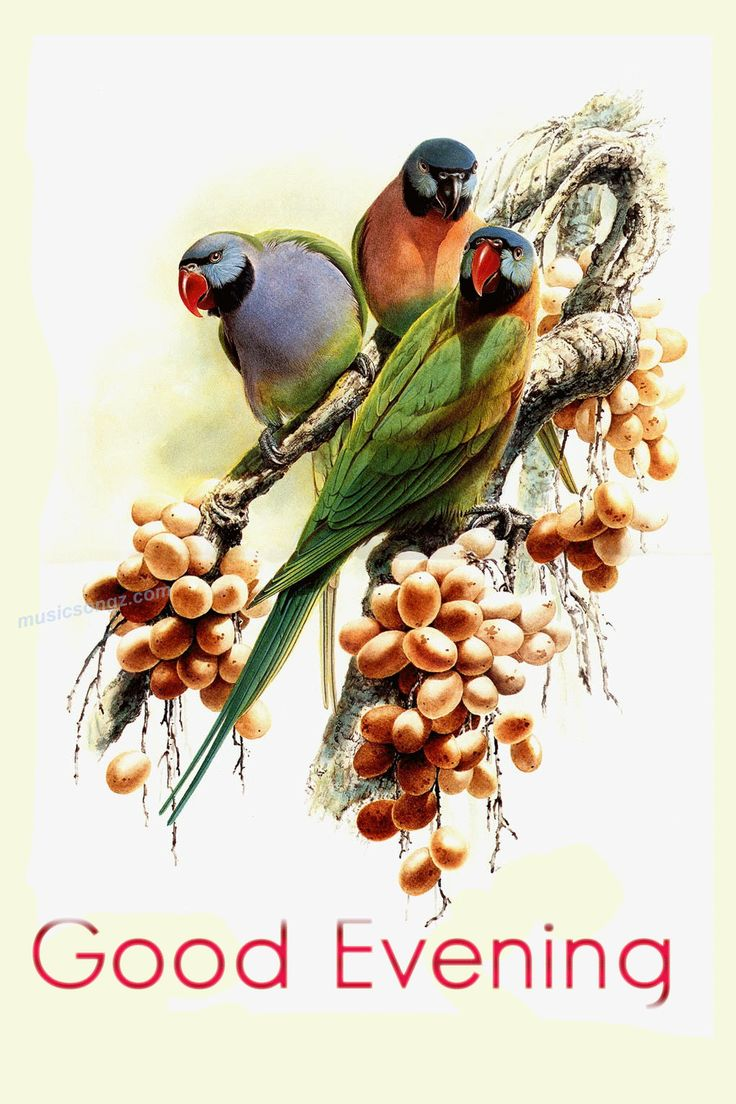 91 best pretty animated birds images on pinterest animals