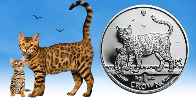 Before you buy a Bengal cat, there are a few things that you should know!  https://www.bengalcats.co/bengal-cat-price/