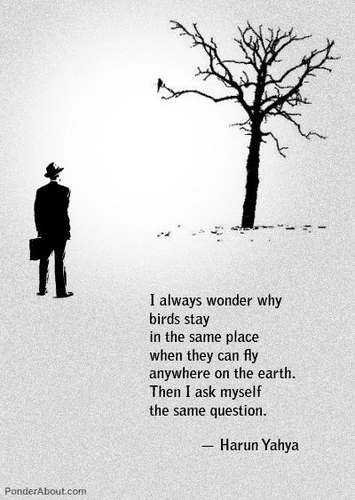 I always wonder why...: Harunyahya, Food For Thoughts, Harun Yahya, Foodforthought, So True, Places, Birds, Flying Away, Inspiration Quotes