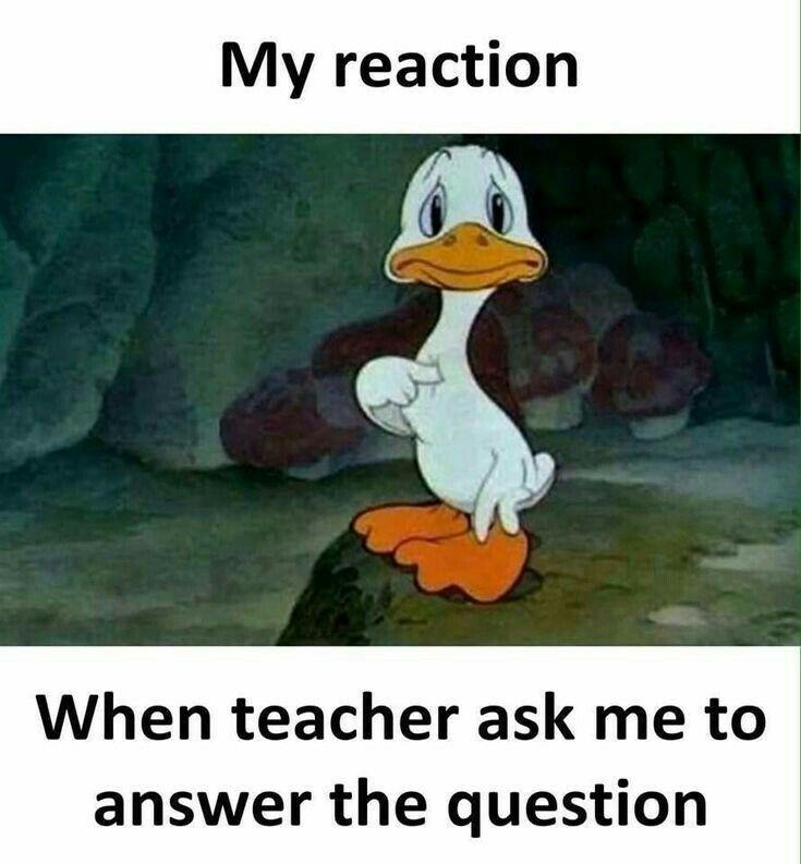 My Reaction Funny School Memes Funny School Jokes Student Humor